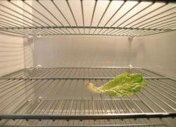 Холодильники американских холостяков