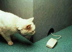Сколько еще проживет компьютерная мышь?