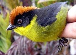 Ученые реабилитировали обоняние птиц