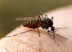 Телефон как средство от комаров