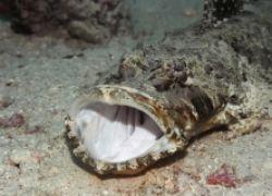 """Какие \""""морские чудовища\"""" обитают в Черном море?"""
