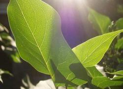 Китайцы сделали шаг к искусственному фотосинтезу