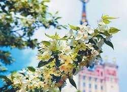 Стиль жизни: где в Москве жить лучше?