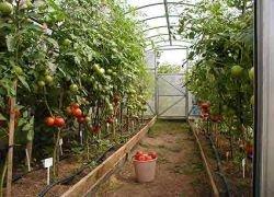 Вертикальные фермы - тепличные хозяйства на стероидах