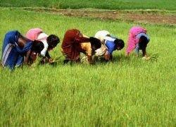 ЕС хочет помочь африканским фермерам