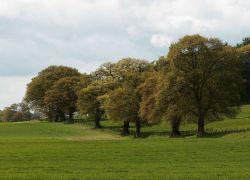 Власти в Англии нашли новый метод защиты деревьев