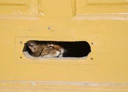 Кота отправили по почте через Германию