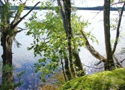 Экологи Петербурга борются за областную природу