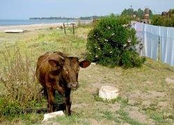 Стоит ли ехать на отдых в Абхазию?