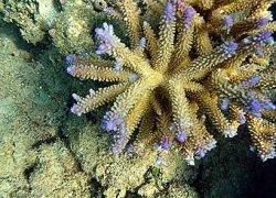 Кораллы рассказали о землетрясениях прошлого