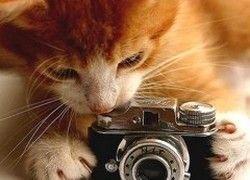 Microsoft и netPrint.ru открыли сервис онлайновой фотопечати