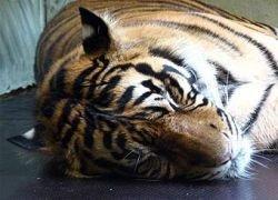 Ученые определили законы сна млекопитающих