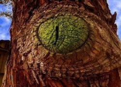 Деревья с человеческими лицами