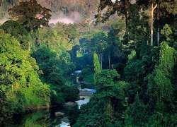 К 2030 году половина тропических лесов Амазонки может исчезнуть
