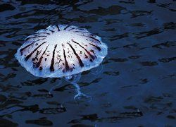 Тревога на Средиземноморье: от ожогов медуз пострадали сотни людей