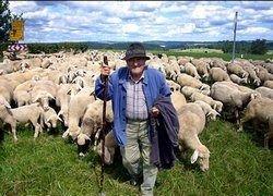SMS заменит пастуха?