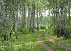 Медведев разрешил россиянам посещать арендованные леса