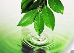Мир сошел с ума от экологической горячки?