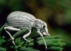 Ученые нашли неизвестных доисторических насекомых