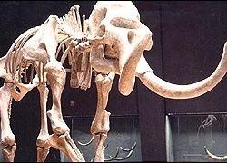 В Минске строители откопали мамонта