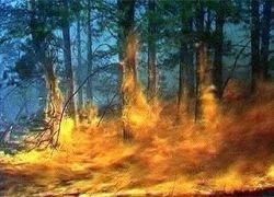 Пожары охватили леса Коми