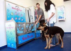 В Праге открылась мойка для собак