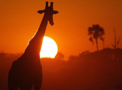 Природа Африки гибнет от глобального потепления