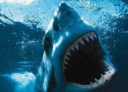 Рыбалка на акул любимое развлечение туристов в Португалии