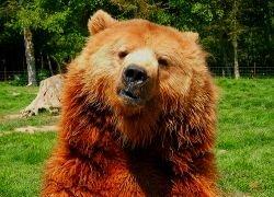 На Камчатке семья из трех человек убежала от медведя