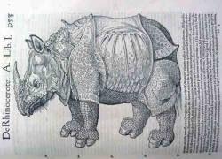 Носороги на Урале обитали 9 тысяч лет назад