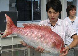 В Японии создали робота-рыбу