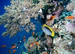 Красное море спасет мужчин от простатита