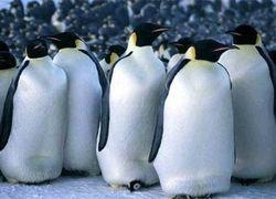 В Бразилии продолжается нашествие унесенных течением пингвинов
