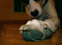 В США собака обзавелась протезом нового поколения