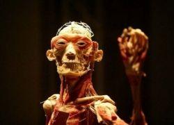 На выставке показали человеческие тела без кожи