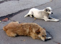 Онищенко призвал москвичей не общаться с дикими животными