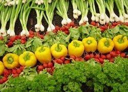 Зеленые знаменитости: вегетарианство входит в моду