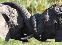 Влюбленные животные: фотокадры из документального фильма