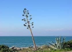 Жителей Кипра подозревают в отравлении деревьев