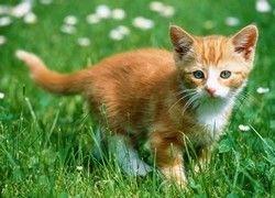 В Саудовской Аравии запретили домашних кошек и собак