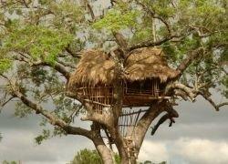 Необычное жилье на деревьях