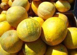 Как не отравиться ранними арбузами и дынями?