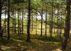 Нефтяники просят отсрочки по оформлению в аренду лесных земель