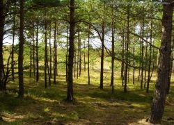 Москва заберет у Рослесхоза функции по управлению лесами Подмосковья
