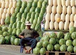 Эксперты советуют не покупать арбузы на придорожных развалах