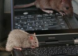 Шифрование дисков не защитит от хакеров