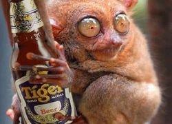 Алкоголь крайне полезен?
