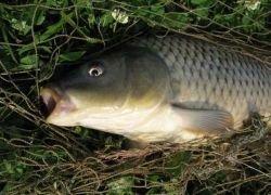 В украинской реке рыба дохнет тоннами