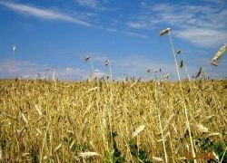 Британские фермеры поднимают российское село
