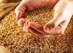 Чем обернется решение России контролировать рынок зерновых